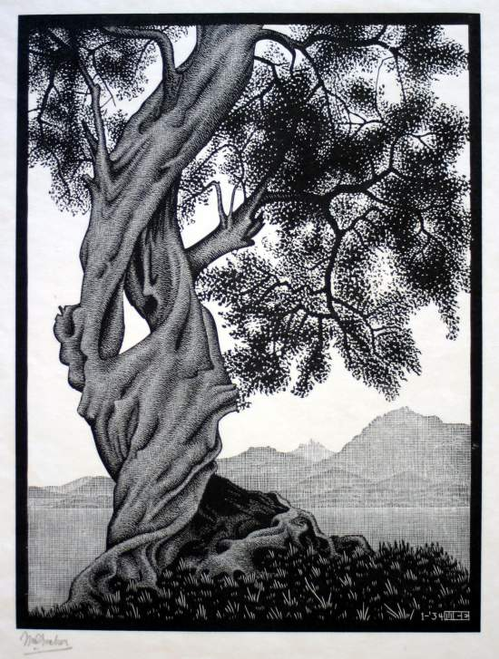 MC Escher Olive tree