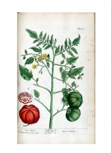 Botanical-A-curious-herbal-Fruit-Amoris-Pomum-727x1000